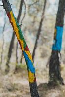 """Dijous s'estrena """"Natura és Cultura"""", una exposició fotogràfica i audiovisual que mostra el treball artístic de persones d'entitats de salut mental de Catalunya"""